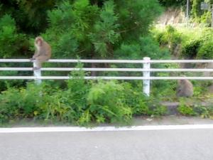 <猿の楽園>