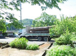 <庭木の伐採2>