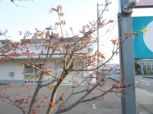 <チューリップが咲きました>