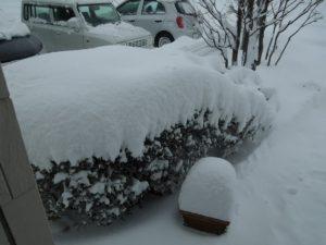 <大雪警報が出ました>